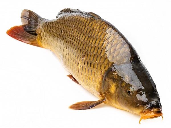 Mộng thấy ăn cá ?giải mã giấc mơ thấy cá