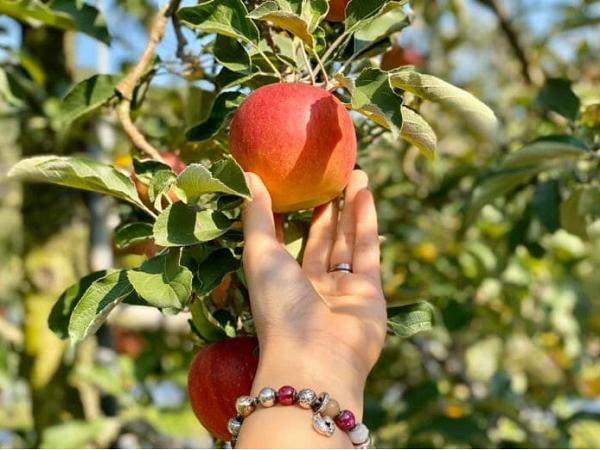 Nằm mơ thấy quả táo đánh con gì?