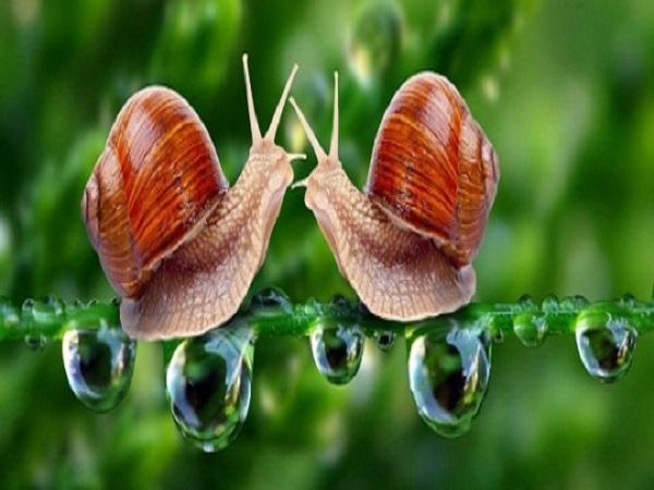 Mơ thấy con ốc có điềm báo gì? đánh con số nào?